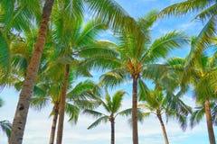 Kokosnötpalmträdsikt och blå himmel på stranden royaltyfri foto