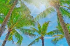 Kokosnötpalmträdsikt och blå himmel på stranden royaltyfri fotografi