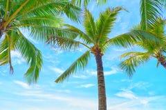 Kokosnötpalmträdsikt och blå himmel på stranden fotografering för bildbyråer