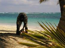kokosnötpaus Fotografering för Bildbyråer