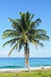 Kokosnötplam och strand Royaltyfria Bilder