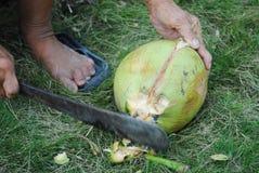 kokosnötrivjärn Arkivbilder