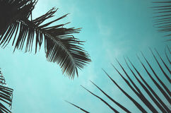 Kokosnötsidor Royaltyfri Fotografi
