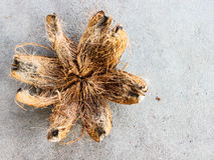 Kokosnötskal Arkivbild