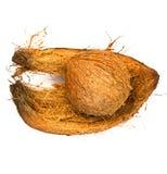 Kokosnötskal och kokosnötspathe Arkivbilder