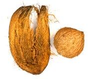 Kokosnötskal och kokosnötspathe Fotografering för Bildbyråer