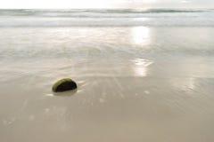 Kokosnötskal på stranden Arkivbilder