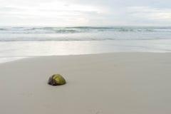 Kokosnötskal på stranden Arkivfoto
