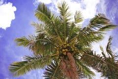kokosnötsky royaltyfria bilder