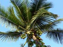 kokosnötsky arkivbilder