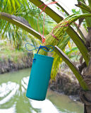 kokosnötsocker Royaltyfria Foton