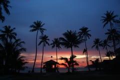 Kokosnötstrandsoluppgång Royaltyfri Bild