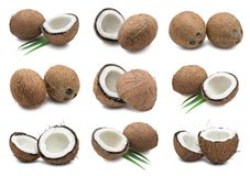 Kokosnötter Arkivfoto