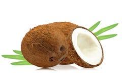 Kokosnötter Royaltyfria Foton