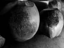 Kokosnötter 2 Arkivbilder