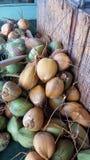 Kokosnötter Kihei, Maui, ö, USA Arkivfoto