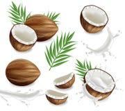 Kokosnötter med den realistiska vektorn för färgstänkuppsättningsamling Exotiska kort f?r orienteringsmallv?ndkrets vektor illustrationer