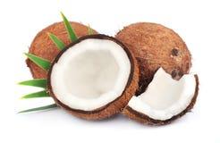Kokosnötter med leaves royaltyfri bild