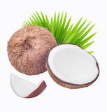Kokosnötter med leaves Royaltyfri Fotografi