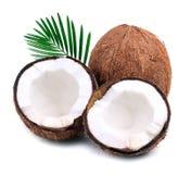 Kokosnötter med leaves bär fruktt tropiskt Royaltyfri Fotografi
