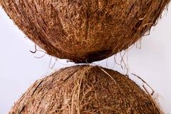 Kokosnötter - närbild Royaltyfria Bilder