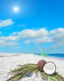 Kokosnötter och gömma i handflatan filialer under solen Royaltyfri Bild