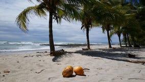 Kokosnötter och palmtrees Arkivfoton