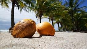 Kokosnötter och palmtrees Fotografering för Bildbyråer
