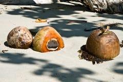 Kokosnötter på en tropisk strand Arkivfoto