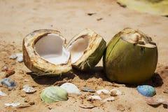 Kokosnötter på sanden Arkivbild