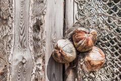 Kokosnötter på träplattan Arkivfoto