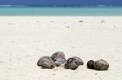 Kokosnötter på vit sand Fotografering för Bildbyråer