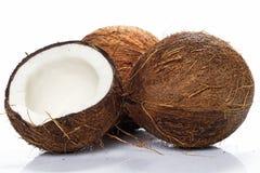 Kokosnötter på vitbakgrund Royaltyfria Foton