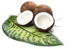 Kokosnötter på vitbakgrund Fotografering för Bildbyråer