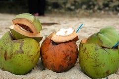 kokosnötter tre Arkivbilder