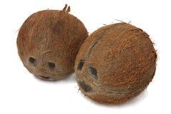 kokosnötter två Royaltyfria Bilder