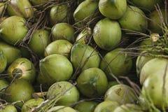 Kokosnötterna Royaltyfri Fotografi