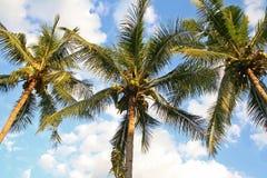 Kokosnötträd och blå himmel royaltyfri fotografi