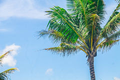 kokosnötträd på blå himmel Royaltyfri Foto