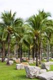 kokosnötträdgård Royaltyfri Bild