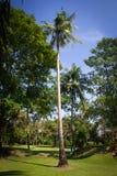 Kokosnöttree i den härliga trädgården Arkivbild