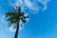 Kokosnöttree på stranden Arkivfoton