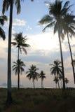 Kokosnöttree på stranden Royaltyfri Fotografi