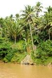 KokosnötTrees royaltyfri bild