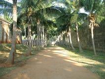 kokosnöttrees Royaltyfria Bilder