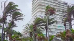 Kokosnöttrees på strand lager videofilmer