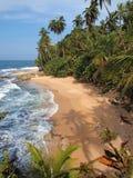 Kokosnöttreeskupor på en unspoiled strand royaltyfria bilder