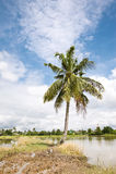 kokosnötvägtree Arkivbilder