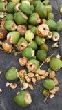 Kokosnötvatten Arkivfoto