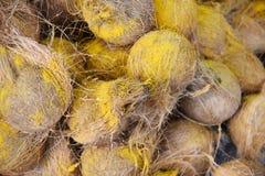 kokosnüsse lizenzfreie stockbilder